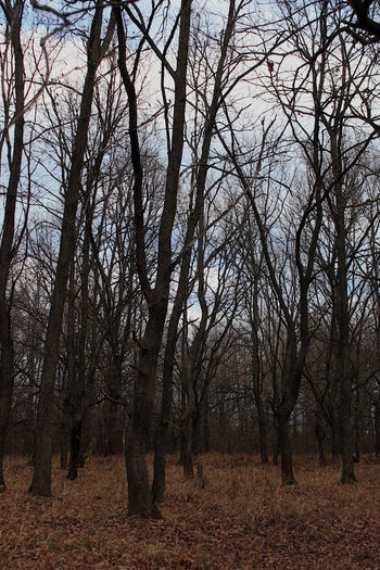 Bare trees on field in forest against sky