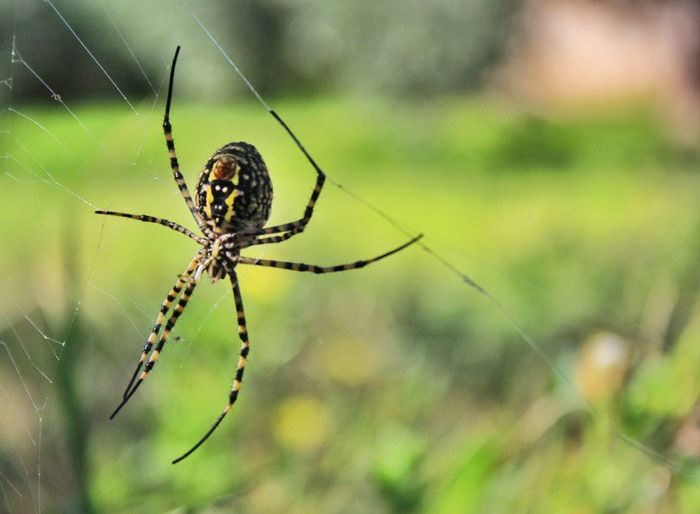 Spider Spider Web One Animal Animals In The Wild Focus On Foreground Insect Animal Wildlife Animal Themes Animal Leg Close-up Day No People Outdoors Nature Fragility Green Color Backgrounds Scenics Trapped Spider Inspired Nature Tranquil Scene