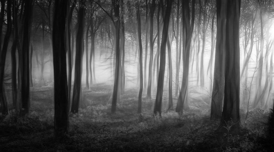 Winter Misty Woodlands Ghostly Winter WoodLand Beauty In Nature Branch Day Fog Foggy Forest Forest Photography Landscape Mist Mystery Nature No People Outdoors Plant Scenics Spooky Tranquil Scene Tree Wilderness Area WoodLand Woods