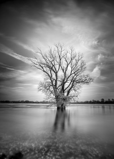 Hochwasser Rhein Winter Bare Tree Beauty In Nature Black And White Blackandwhite Branch Day Flood Isolated Landscape Lone Long Exposure Majestic Nature No People Outdoors Scenics Sky Tranquil Scene Tranquility Tree Water