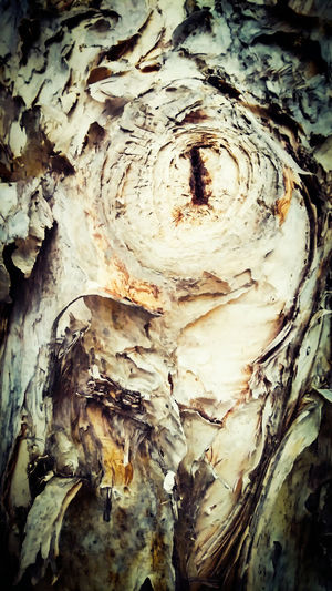 My Favorite Photo - This is so amazing favourite photography of textures gum tree barks. Awesome photography of all nature and different textures gum tree barks. Awesome_nature_shots Textures In Nature Marco Photography Barks Of A Tree Gum Tree Photo Of The Day Textures And Patterns Texture In Nature Textures And Shapes Natural Pattern Beautiful Photography💕 in Boondall, Queensland