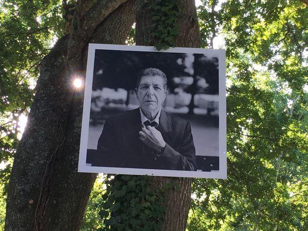 Festival Folk Leonard Cohen Light Rock Route Du Rock Tree