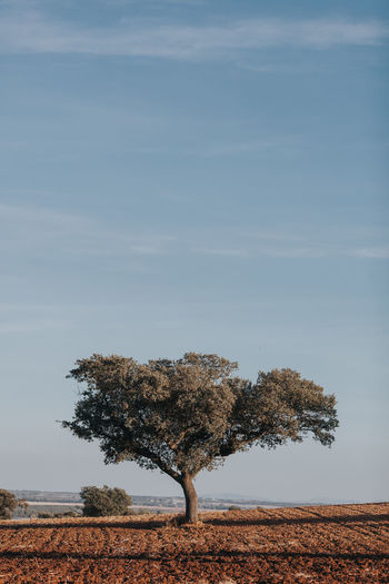 Tree On Landscape Against The Sky