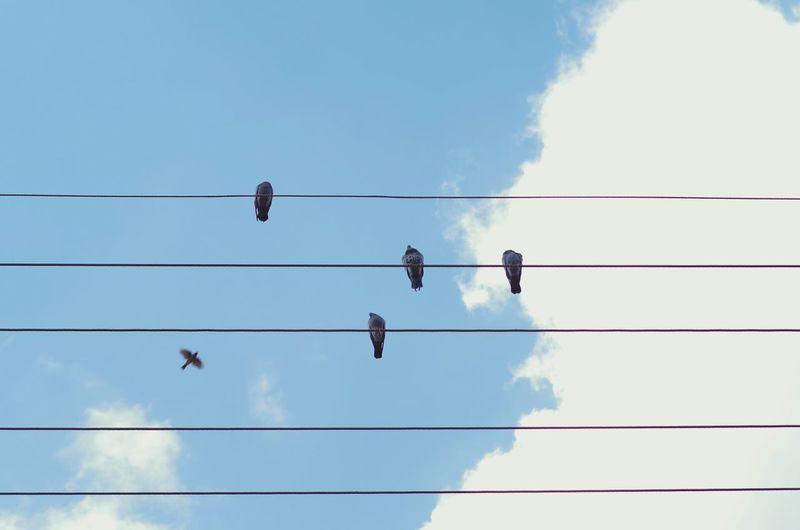 窗外的麻雀,在电线杆上多嘴,你说