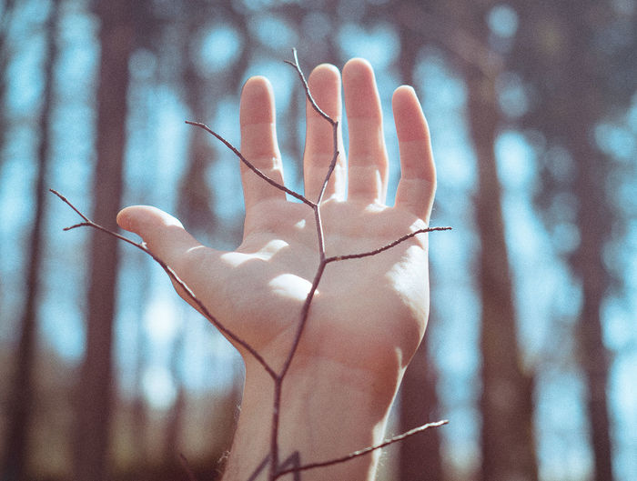 Close-up of hand holding stick against trees in forest
