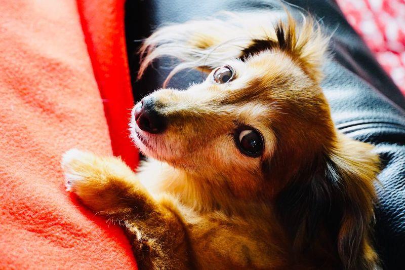 Sola Mydog ♥
