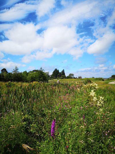 Flower Rural