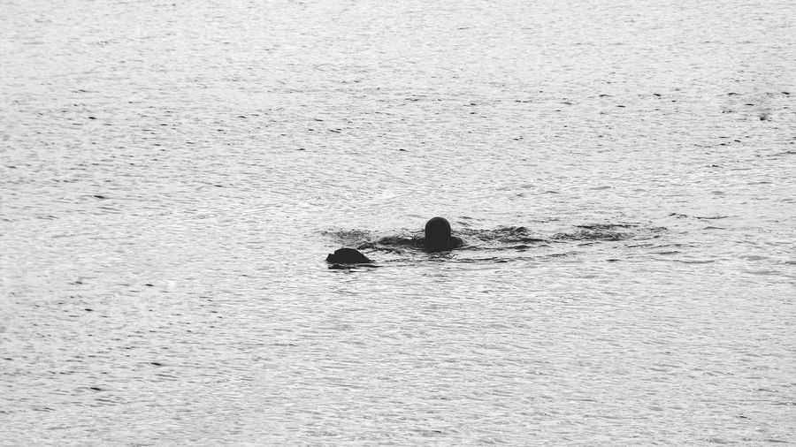Man Swimming With Your Dog