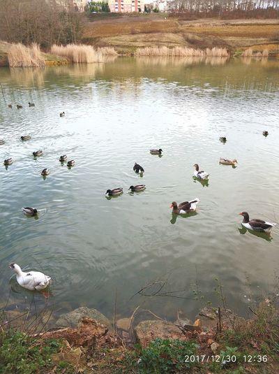 Animals In The Wild Bird Animal Themes Water Swimming Lake Reflection