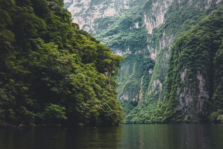 Tree Plant Water Scenics - Nature Mountain Forest Land Beauty In Nature Nature No People Non-urban Scene Day Growth Outdoors Environment River Foliage Tranquility Lush Foliage Formation