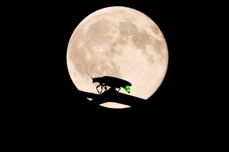Moon Night Japan Firefly