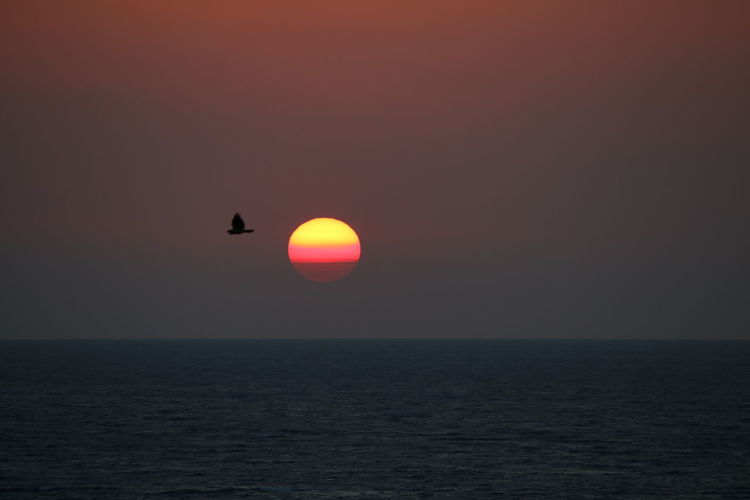 Sea Bird In Sunset Sea And Sunset Colours Of Sunset s Sunset_collection AtmosphereOrange Color Idyllic Tranquility Beauty In Nature Tranquil Scene Sunset Scenics Horizon Over Water Sun Sun_collection Decisive Moment 3XSPUnity Done That. Be. Ready.