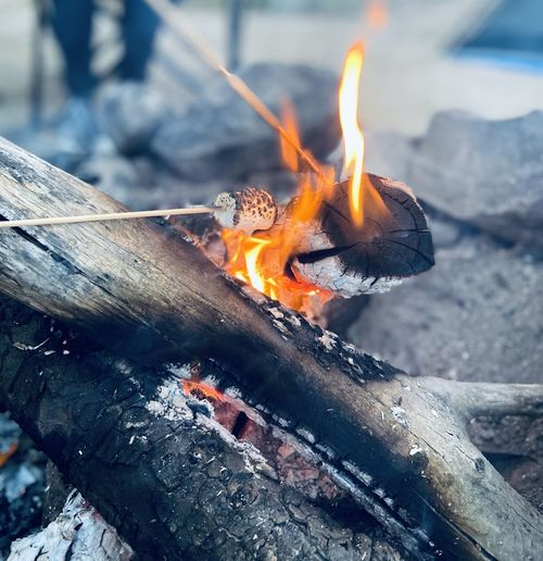 Close-up of marshmallows in burning fire