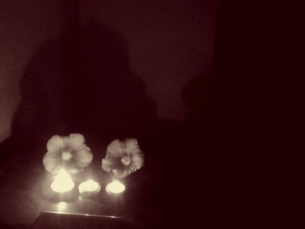 flores y trio de luces Sepia Photography Barroco Austral Still Life Showcase March