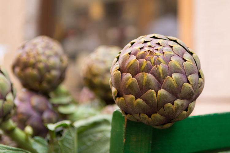 Close up of fresh artichoke outdoors. selective focus Artichoke Close-up Food Freshness Organic Vegetarian Food Vegetable Raw Food Nature Outdoors Market Flea Market Cultivated Recipe Harvest Fresh Freshness Ripe Agriculture Edible  Cooking Garden Gardening Eating Natural