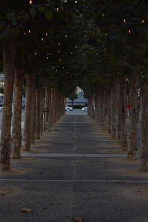 Tree City Treelined vanishing point Passageway Double Yellow Line Road Marking Passage Historic Country Road Archway Diminishing Perspective The Way Forward Pathway Architectural Column Walkway Narrow Empty Road Colonnade