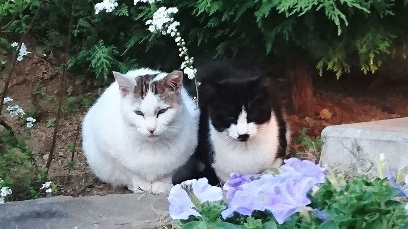Cat Good Friends ねこ いつも一緒 白 ト 黒 ひなたぼっこ