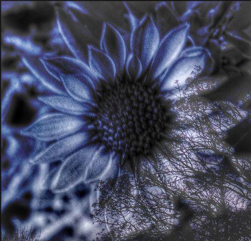 EyeEm Best Shots - Nature EyeEm Best Shots Overlay Editing Experimental Photography EyeEmNewHere Blue Mystery Flower Fragility Nature Flower Head Beauty In Nature Petal No People Full Frame