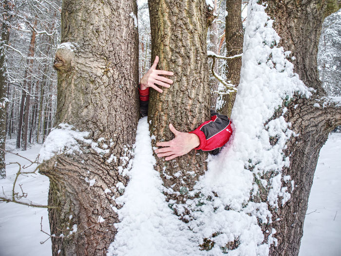 Male hands hold bark of tree trunk. rough tree bark with snow, leaves forest in background