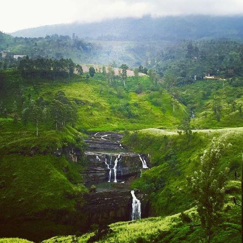 Nuwara Eliya SriLanka Travel Green Holiday Forest Nature Landscape