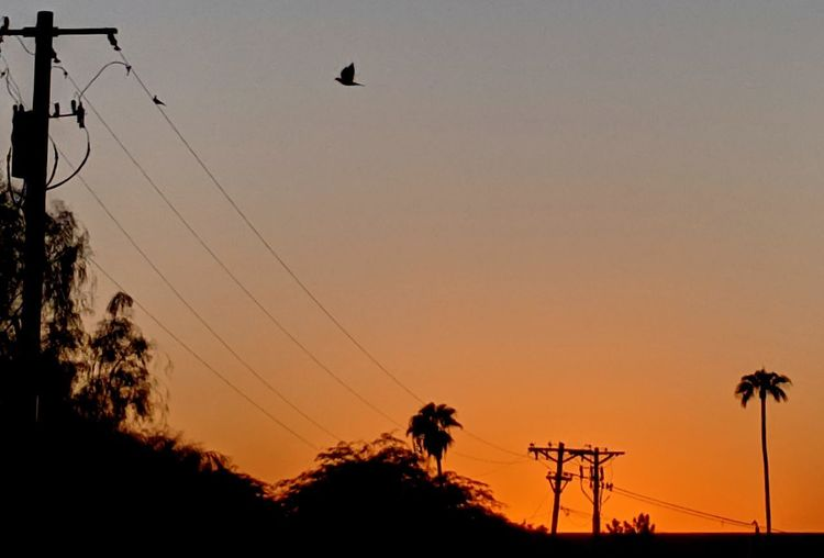 Silhouette of birds against sky during sunset