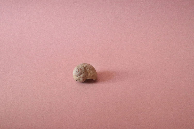 Animal Shell Animal Themes Close-up Day Gastropod Light And Shadow Nature No People One Animal Pink Background Shell Shells Snail Snail Snail Shell Snail Shells Snails Snailshell Studio Shot Millennial Pink Millennial Pink Art Is Everywhere TCPM Break The Mold (null) BYOPaper! EyeEm Selects Breathing Space Perspectives On Nature Visual Creativity