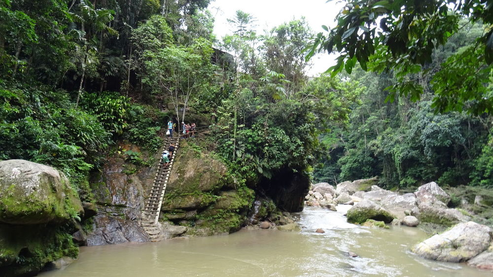 Adventure Beauty In Nature Day Forest Growth Jungle Nature No People Outdoors Peru River Tree Water Waterfall