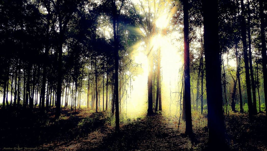 'Through the mist, the morning light' Morninglight Sunlight And Shadow Sunlight Through Trees Sunshine ☀ Early Morning Walktrail Trailwalking Woodscapes Woods And Color Woodsy Woodsy Living Woods Sunrise Sunbeam Photoshop Edit Fujifilm