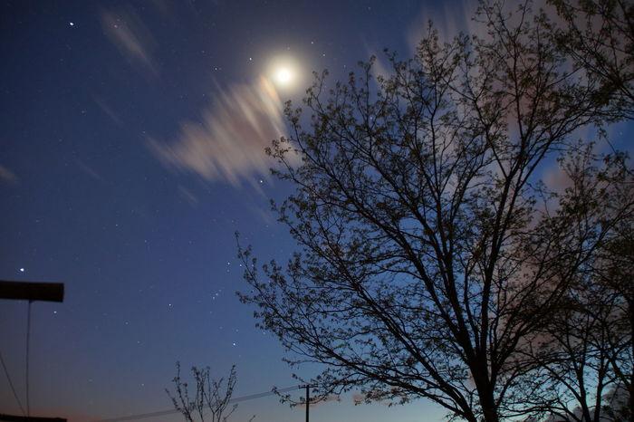 Astronomy Beauty In Nature Blue Cloud Cloud - Sky Dark Moon Night No People Outdoors Sky Tree Treetop