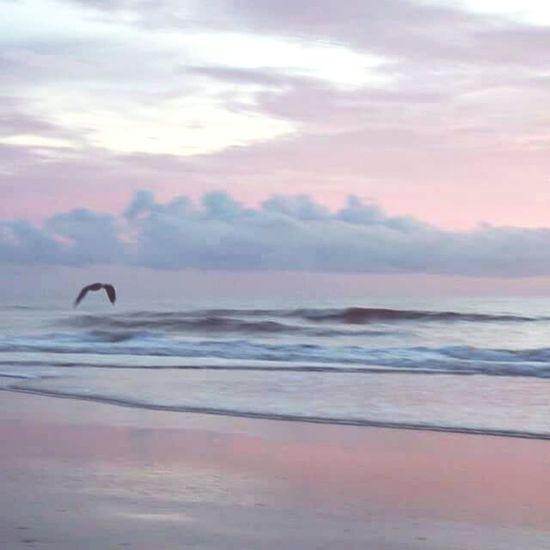 Just Sharing A Photo Florida Life Is A Beach Ocean View St. Augustine, FL