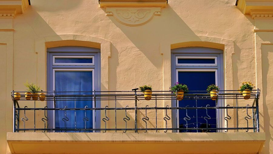 Potted plant on balcony of building