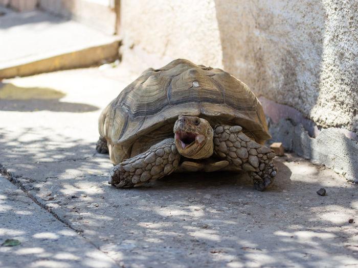 Tortoise on field