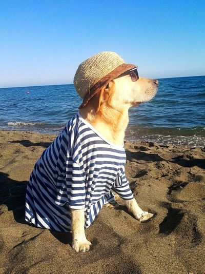 Dog Beach Sea Pets One Person Sand Casual Clothing Day Leisure Activity Outdoors Clear Sky Rear View Horizon Over Water Mature Adult Vacations One Animal Sun Hat Sky People Water Landscape Nature Photography Beach Photography Sunlight Sunset_collection