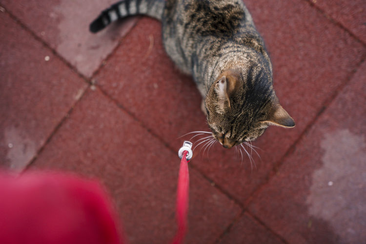High angle view of cat drinking water on footpath