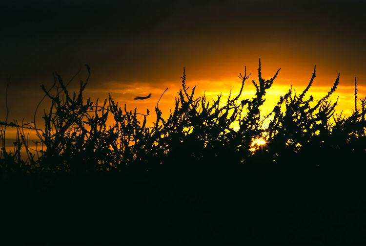 Silhouette plants on field against orange sky