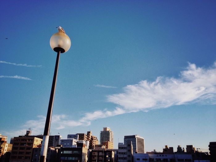 Low angle view of bird perching on street light in city against sky