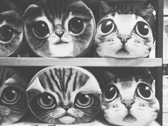 Hi! Taking Photos Hanging Out Cats Black And White Black And White Photography Black And White Collection