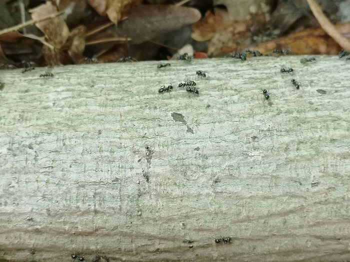 Close-up of ants on the ground
