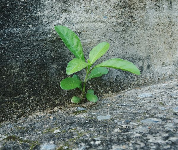 Green Color Leaf High Angle View No People Day Plant Close-up Outdoors Nature Fragility Growth Freshness