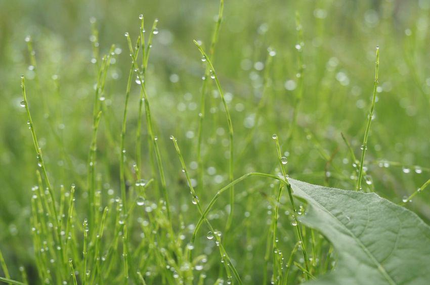 きらきら✨ Drop Water Close-up Wet Green Color Nature Beauty In Nature Talking Photos EyeEm Nature Lover EyeEm Best Shots Macro
