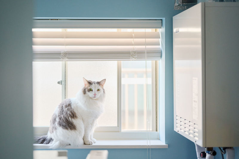 Portrait of white cat sitting by window at home