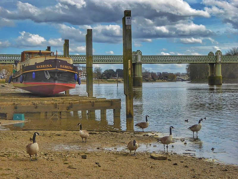 Chiswick ChiswickRiverside Thames Thames River Thames Beach  London LONDON❤ Low Tide Canada Geese Bridge Metal Bridge Riverscape Riverscene Riverside View Riverscapes Beautiful Clouds Landscape Reflections Reflections In The Water Water Reflections Railway Bridge Bridges Barnes Bridge Nature As Artist The KIOMI Collection