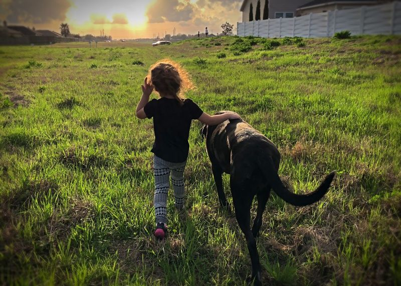 A girl and her dog Big Dog Afternoon Suburban Neighborhood Sunset Pets Childhood Girl Dog Domestic Animals Field Mammal Animal Themes Grass Rear View Real People