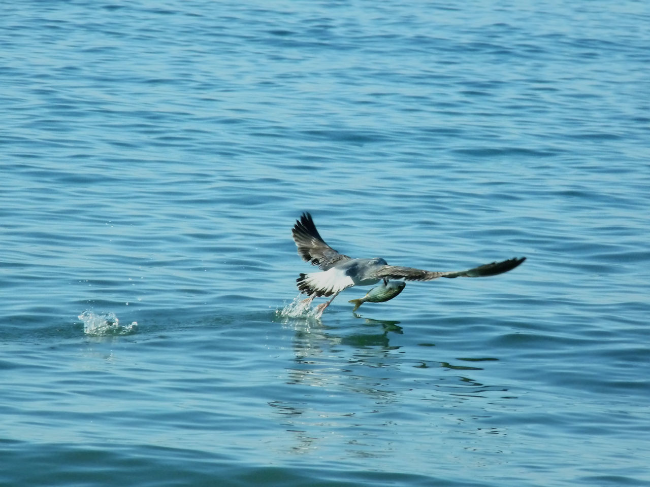 water, animal themes, waterfront, one animal, motion, outdoors, nature, swimming, day, no people, lake, domestic animals, pets, mammal, bird