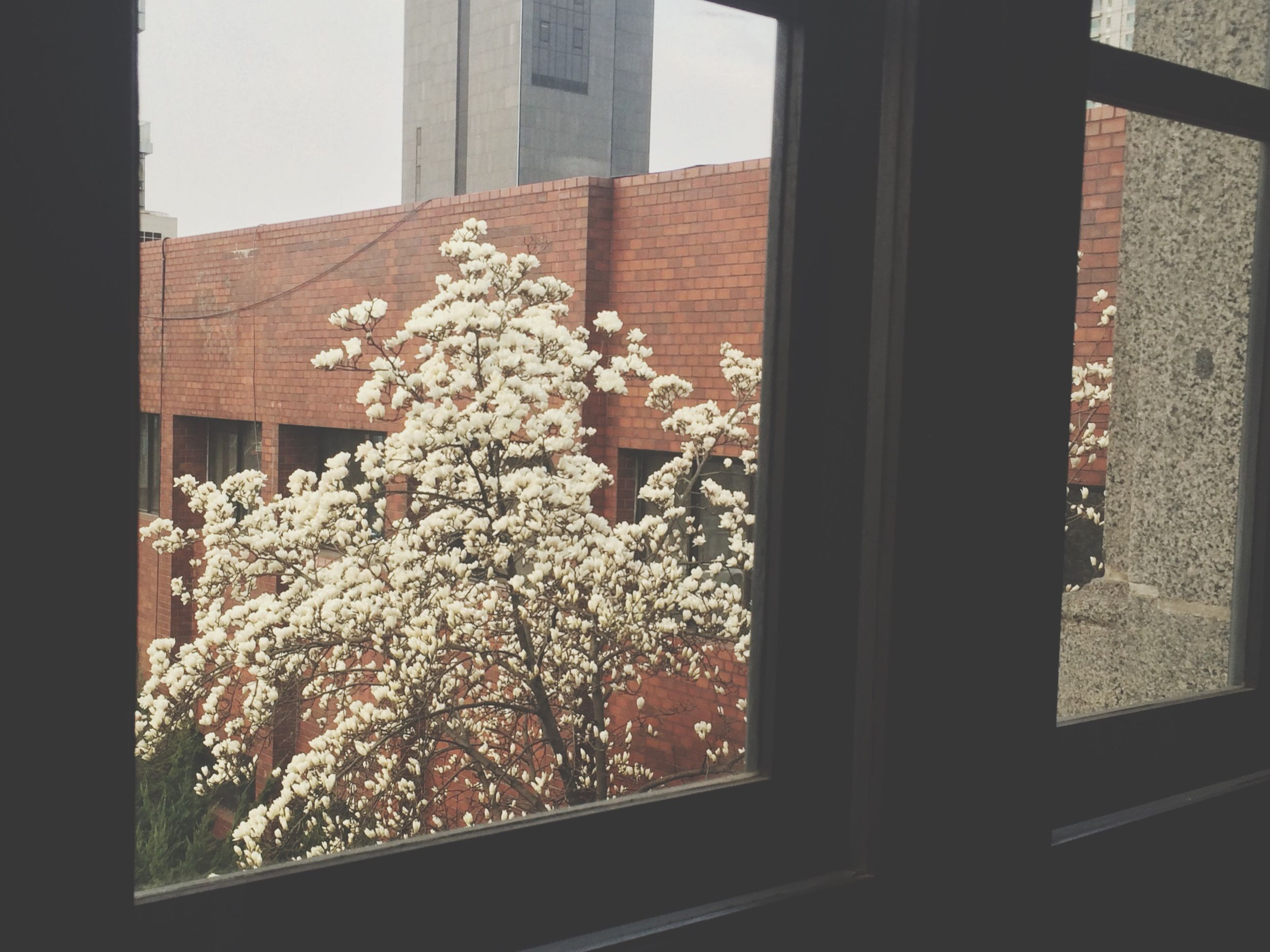 window, indoors, glass - material, house, architecture, built structure, building exterior, transparent, flower, window sill, home interior, growth, plant, potted plant, day, residential structure, no people, close-up, residential building, nature