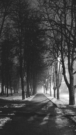 Nightshot Blackandwhite Light And Shadow Magical Trees Foggy Night 🌌💭