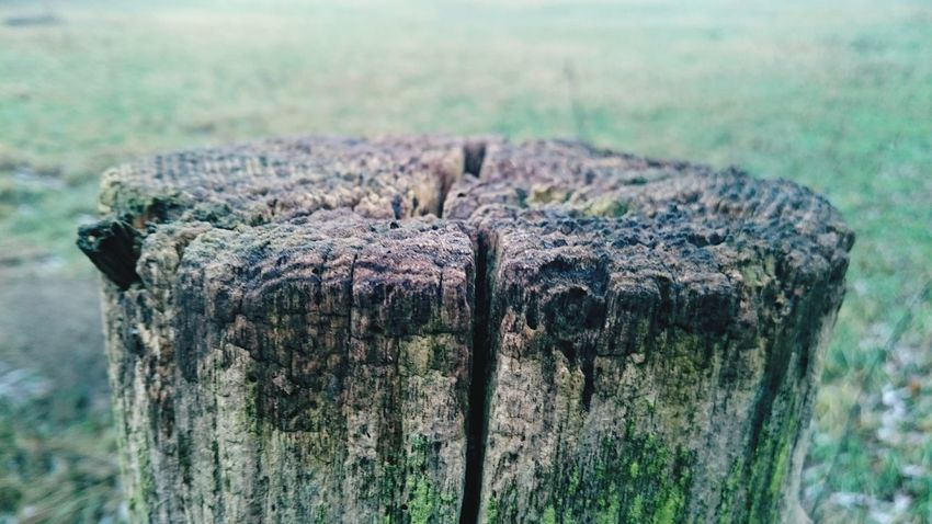 Grass No People Tree Stump Day Focus On Foreground Wood - Material Nature Outdoors Close-up Beauty In Nature