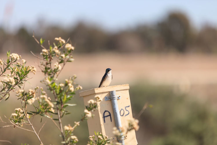Swallow perching on birdhouse
