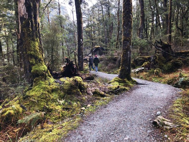 Explore New Zealand Exploring Plant Tree Growth No People Nature Day Beauty In Nature Outdoors Tranquility WoodLand