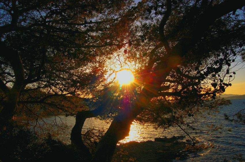 Sunset Tree Nature Sunlight Sun Beauty In Nature Growth No People Scenics Tranquility Sunbeam Outdoors Sky Close-up Day Sunlight Sunny Day Contrejour-shadow Photography Contre-jour Contrejour Contre Jour Contre-jour Shot Sea Miles Away